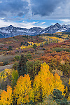 Uncompahgre National Forest, Colorado:<br /> Fall colors on the Dallas Divide with the Sneffels range in the distance
