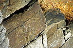 Unique rock engravings believed to date from the Upper palaeolithic period, around 10,000 to 30,000 years ago in the Coa valley, a tributary of the Douro river near the town Vila Nova de Foz Coa in Northern Portugal. A hydroelectric dam project drained the river as seen in these images shot in October 1995, revealing more engravings of montain goats, horses, aurochs ( wild bulls) and deer and after excavation revealed rock shelters under the modern day water line. after a campaign construction of the dam project was halted and Portugal's first archaeological Park was created, becoming a UNESCO world heritage site in 1998.