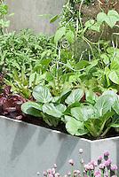 Vegetable Garden in containers