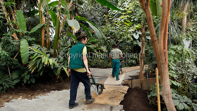 Tropical Rainforest Glasshouse (formerly Le Jardin d'Hiver or Winter Gardens), 1936, René Berger, Jardin des Plantes, Museum National d'Histoire Naturelle, Paris, France. View from behind of gardeners pushing wheelbarrows along a path through the Tropical plants in the Art Deco style Glasshouse.