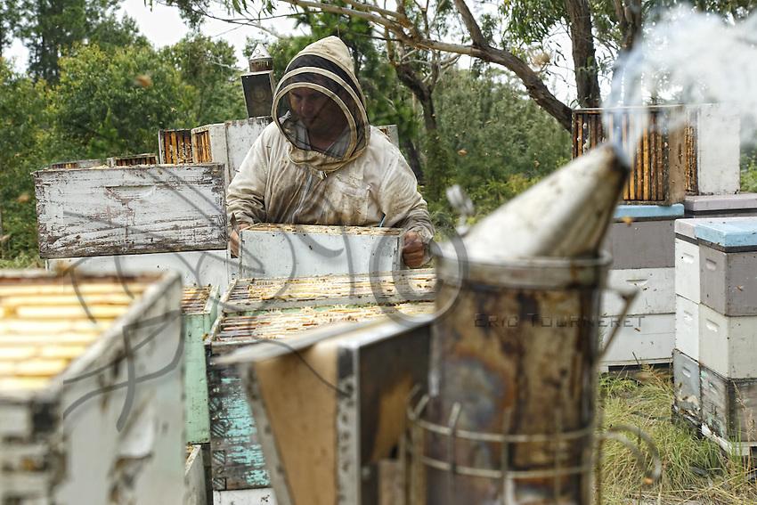 At the apiary during a harvest.///Sur le rucher pendant une récolte.