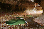 The Subway is a geologic formation of sandstone carved by water in the western half of Zion National Park.  It can only be reached by a strenuous hike via a 5 mile long trail along the Left Fork of North Creek.