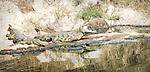 Crocodiles*