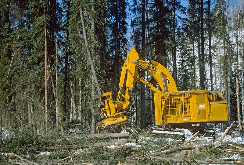 Feller buncher harvests White Spruce trees near Nenana, Alaska