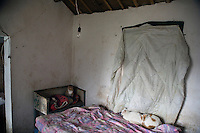 Cats inhabit a small farmhouse at Ha Wenjin's no-kill dog and cat rescue farm outside Nanjing, Jiangsu, China.