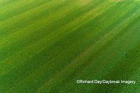 63801-10508 Corn field-aerial Marion Co. IL