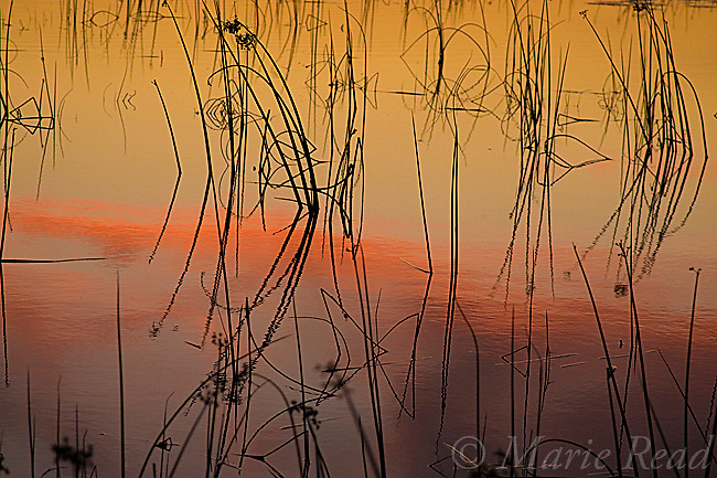 Wetland at sunset, Viera Wetlands, Florida, USA