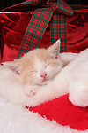 A tan and white kitten sleeping in a Santa hat surrounded by Christmas Gifts