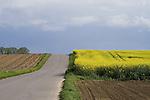 Europa, DEU, Deutschland, Nordrhein Westfalen, NRW, Rheinland, Niederrhein, Juechen, Agrarlandschaft, Bluehende Rapsfelder, Raps, Fruehling, Strasse, Weg, Kategorien und Themen, Landwirtschaft, Landwirtschaftlich, Agrar, Agrarwirtschaft, Natur, Naturfoto, Naturfotos, Naturfotografie, Naturphoto, Naturphotographie, Landschaft, Landschaften, Landschaftsfoto, Landschaftsfotografie, Landschaftsphoto, Landschaftsphotographie......[Fuer die Nutzung gelten die jeweils gueltigen Allgemeinen Liefer-und Geschaeftsbedingungen. Nutzung nur gegen Verwendungsmeldung und Nachweis. Download der AGB unter http://www.image-box.com oder werden auf Anfrage zugesendet. Freigabe ist vorher erforderlich. Jede Nutzung des Fotos ist honorarpflichtig gemaess derzeit gueltiger MFM Liste - Kontakt, Uwe Schmid-Fotografie, Duisburg, Tel. (+49).2065.677997, schmid.uwe@onlinehome.de, www.image-box.com]