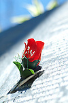 A paper red rose marks the name of one victim among many killed in El Salvador's civil war on The Monument to the Memory and Truth wall in Cuscatlan Park in San Salvador.