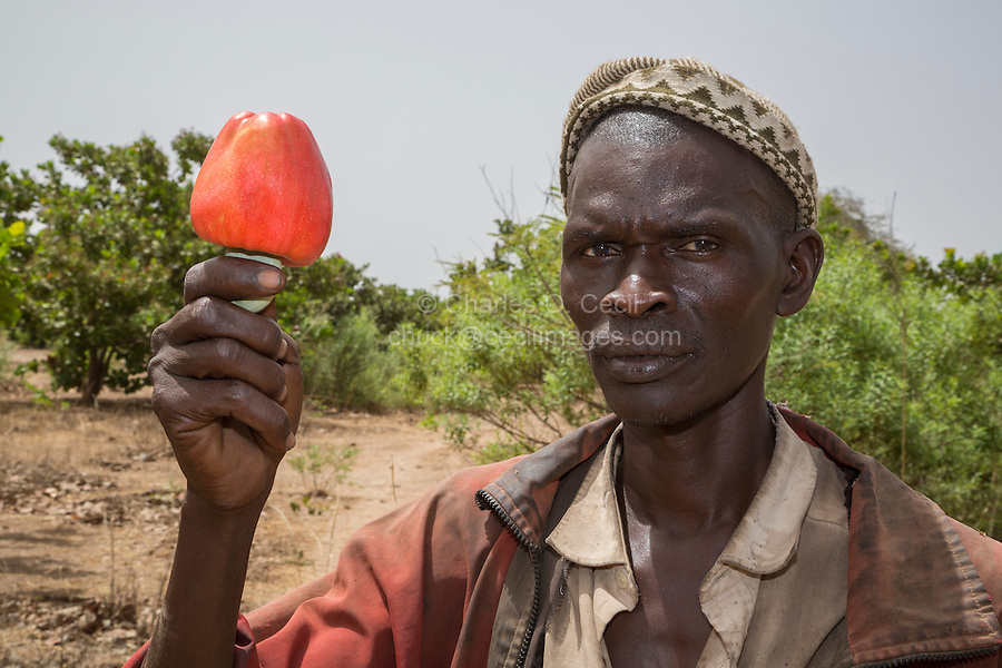 Farmer with Cashew Nut and cashew Apple, near Sokone, Senegal
