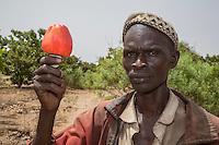 Farmer with Cashew Nut and cashew Apple, near Sokone, Senegal