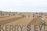 Area Shot of the Abbeydorney ploughing Competition on Sunday.........
