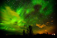 Northern lights or aurora borealis and trees<br /> Dugald<br /> Manitoba<br /> Canada