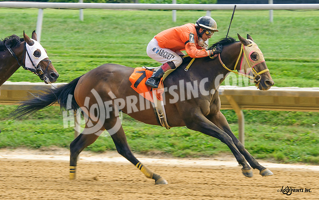 Cherokee Road winning at Delaware Park on 9/3/16