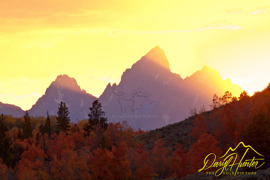 Light beams shoot up from a sun setting behind the Grand Tetons as red aspens continue to glow in the evening light.