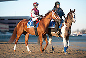 Promising newcomer Long River finished fourth in the Jerome.