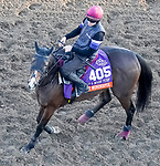 October 31, 2019: Breeders' Cup Filly & Mare Turf entrant Just Wonderful, trained by Aidan P. O'Brien, exercises in preparation for the Breeders' Cup World Championships at Santa Anita Park in Arcadia, California on October 31, 2019. John Voorhees/Eclipse Sportswire/Breeders' Cup/CSM