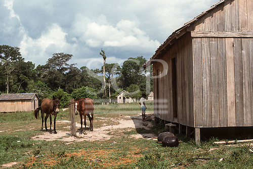 Xapuri, Acre State, Brazil. Two balls of smoked rubber on poles outside a rubber tapper's house with two horses.