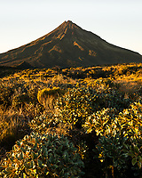 Dawn over Taranaki, Mt. Egmont and alpine vegetation, Egmont National Park, North Island, New Zealand, NZ