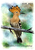 Kris, REALISTIC ANIMALS, REALISTISCHE TIERE, ANIMALES REALISTICOS, paintings+++++,PLKKE576,#a#, EVERYDAY ,birds