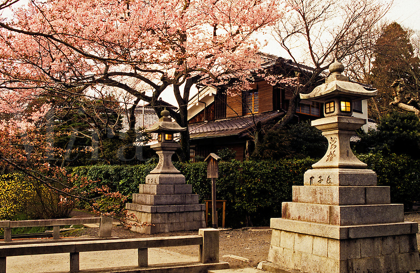 Japan. Kyoto. Gateway, private house and cherry blossom.