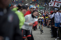 Steven Kruijswijk (NLD/LottoNL-Jumbo) again climbing strong up the dirt roads of the Colle delle Finestre (2178m) <br /> <br /> Giro d'Italia 2015<br /> stage 20: Saint Vincent - Sestriere (199km),