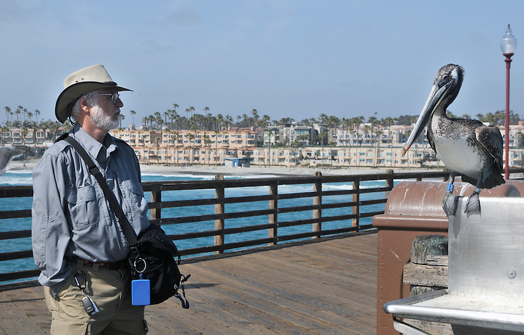 Jim Peppler, relating to a Pelican, perched near a fish cleaning station along the Oceanside Pier, on visit to Oceanside, CA, on Wednesday, April 27, 2016. Photo by Ginny Christensen. Copyright Ginny Christensen  2016.