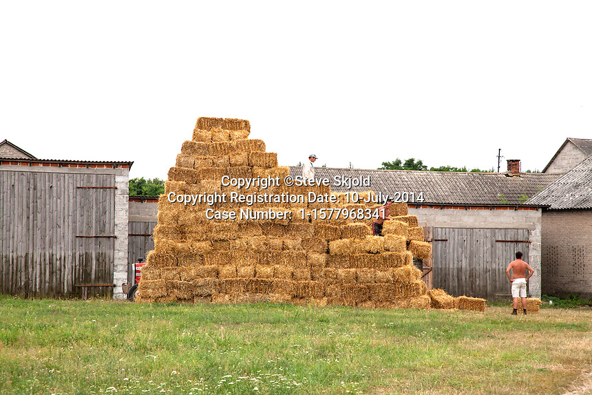 Farmers stacking bundles of harvested hay outside the farm storage building. Zawady Poland