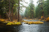 Metolious River and Forest