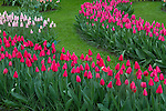 Tulips at Keukenhof Gardens, Lisse, Netherlands. .  John offers private photo tours in Denver, Boulder and throughout Colorado, USA.  Year-round. .  John offers private photo tours in Denver, Boulder and throughout Colorado. Year-round.