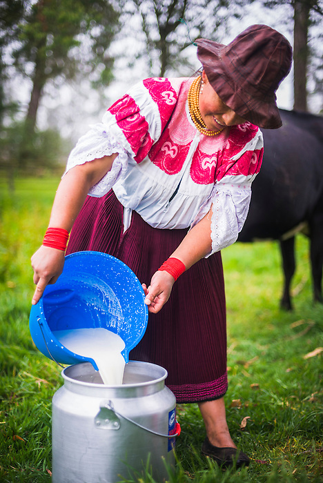 Indiginous Cayambe Lady emptying freshly milked milk into a vat, Zuleta Farm, Imbabura, Ecuador, South America