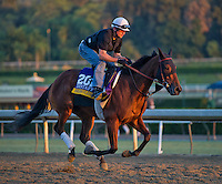 Beholder , trained by Richard Mandella, trains for the Breeders' Cup Distaff at Santa Anita Park in Arcadia, California on October 30, 2013.