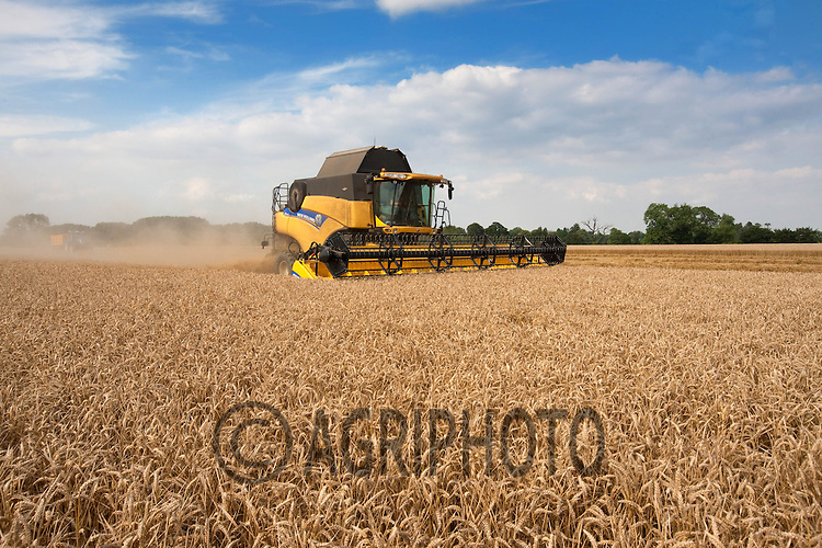 Harvesting Cordial Winter Wheat in Lincolnshire.Picture by Tim Scrivener date taken 11th August 2012.mobile 07850 303986 e-mail tim@agriphoto.com.....covering agriculture in The United Kingdom....