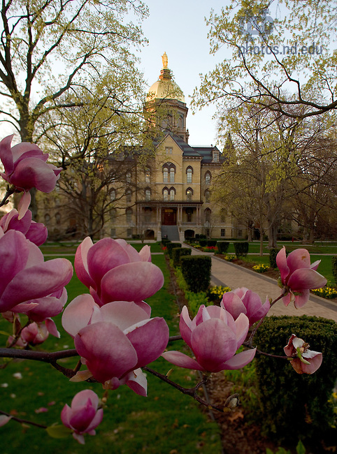 Dome with spring flowers<br /> <br /> Photo by Matt Cashore