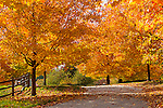 Fall foliage in Hamilton, Massachusetts, USA