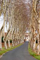 Tree lined road approaching Gasparets. With car. Les Corbieres. Languedoc. France. Europe. Plane trees in winter.