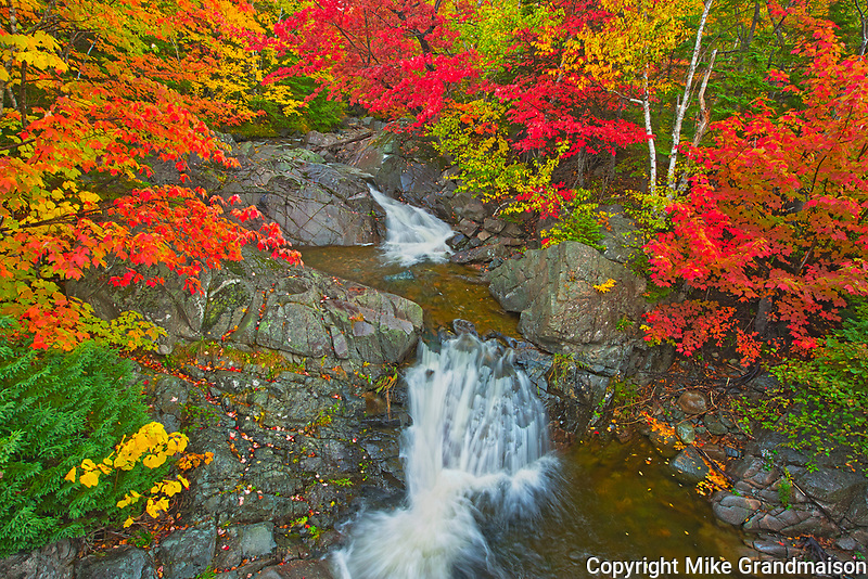 Morrison Brook and the Acadian forest in autumn foliage <br />