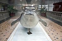 Cherbourg Cité de la Mer  Museo dedicato al mare, esemplare impagliato di foca monaca canadese , estinta