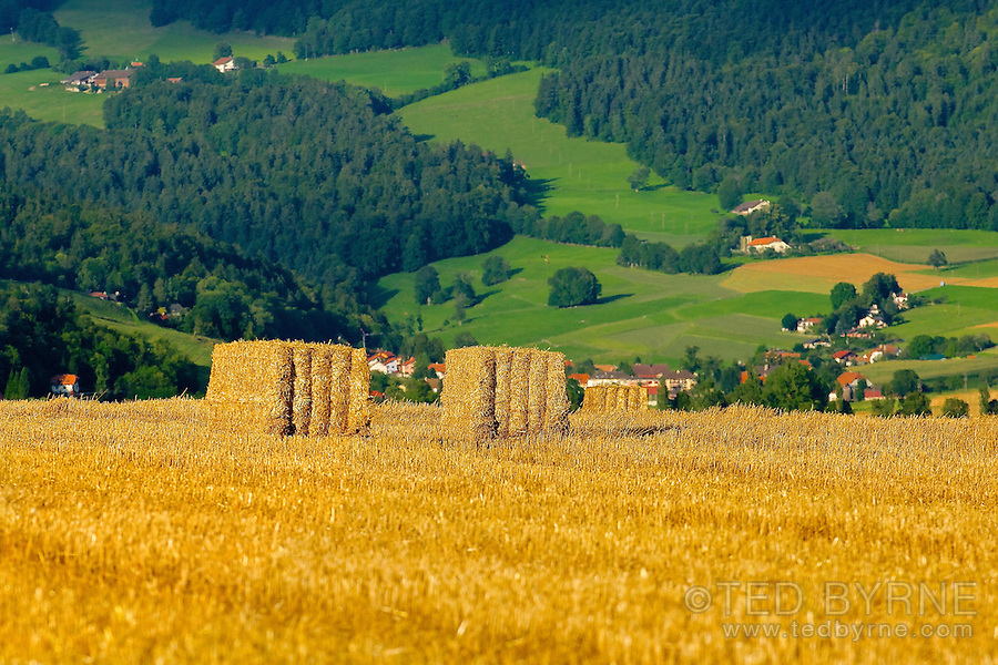 Golden hay bales in green rural surroundings  (Val-de-Ruz, Neuchâtel)