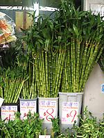 Bamboo, Hong Kong Flower Market