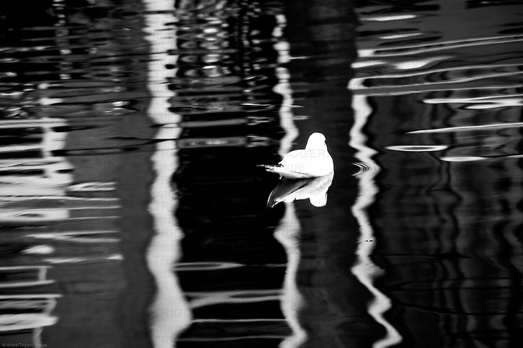 The abstract reflection of patterns and a seagull on the water surface of a canal.