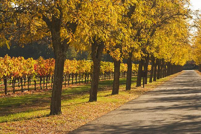 Fall scene in Napa Valley