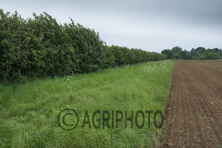 Field margin and hedgerow <br /> &copy;Tim Scrivener Photographer 07850 303986<br /> ....Covering Agriculture In The UK....