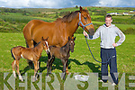 Damian O'Leary Kilcummin with the nine day old twin foals his horse get birth to with a 10,000/1 chance of happening