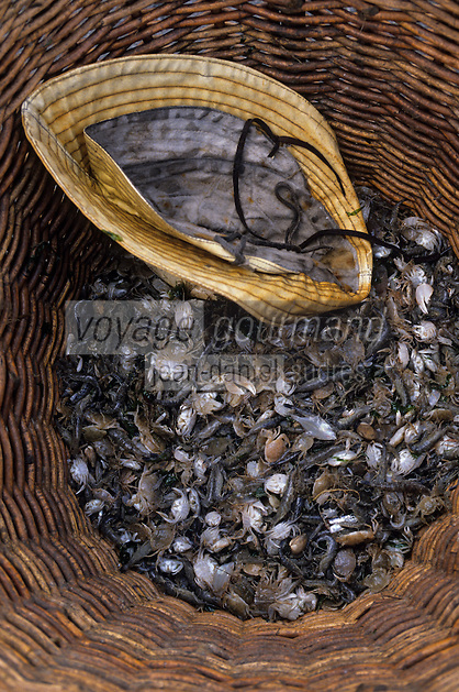 Europe/Belgique/Flandre/Flandre Occidentale/Oostduinkerke : Détail des crevettes grises de la pêche à cheval