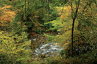 Autumn colours, Ardkinglas, Argyll & Bute<br /> <br /> Copyright www.scottishhorizons.co.uk/Keith Fergus 2011 All Rights Reserved
