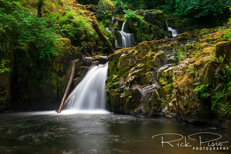 Beaver Falls at the end of the Sweet Creek Trail in Oregon's Suislaw National Forest. Hikers along the Sweet Creek Trail will encounter 11 waterfalls in all, each framed by mossy rocks and ferns and under a canopy of Douglas-fir, Alder and Big leaf maple.