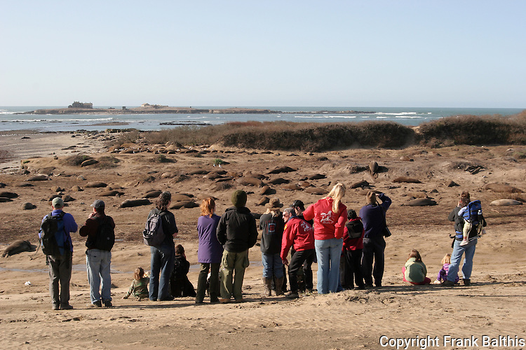 Guided walk viewing elephant seals at Tar Sands