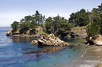 Coastal Bluff  with Cypress Tress, Point Lobos, CA